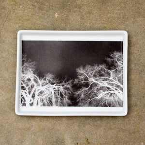 Branches X-Ray Tray Small