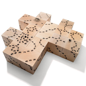 Antics Ant Blocks Set