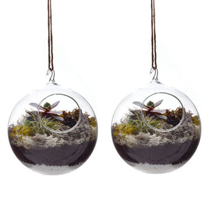 Hanging Terrarium Set Of 2