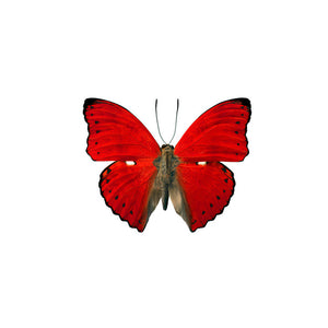 Butterfly Wall Decal 18x15 Red