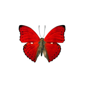 Butterfly Wall Decal 27x22 Red