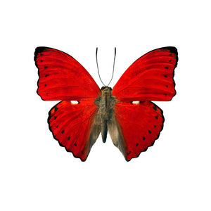 Butterfly Wall Decal 37x31 Red