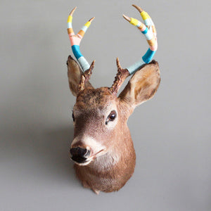 5 Point Taxidermy Shoulder