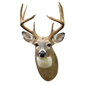 White Tail Deer Decal