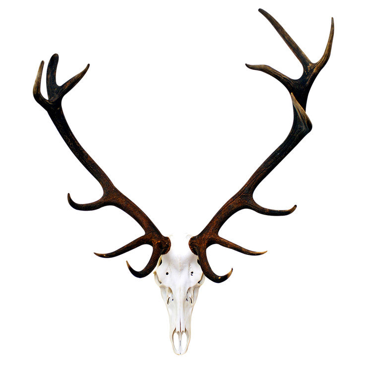 Deer Skull Decal