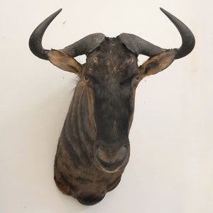 Blue Wildebeest Mount II