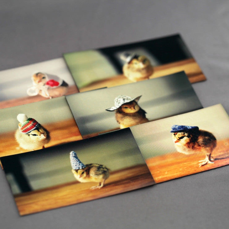 Chicks In Hats Magnets 6 Pack