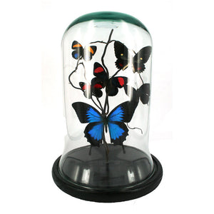 Butterfly Dome Multi