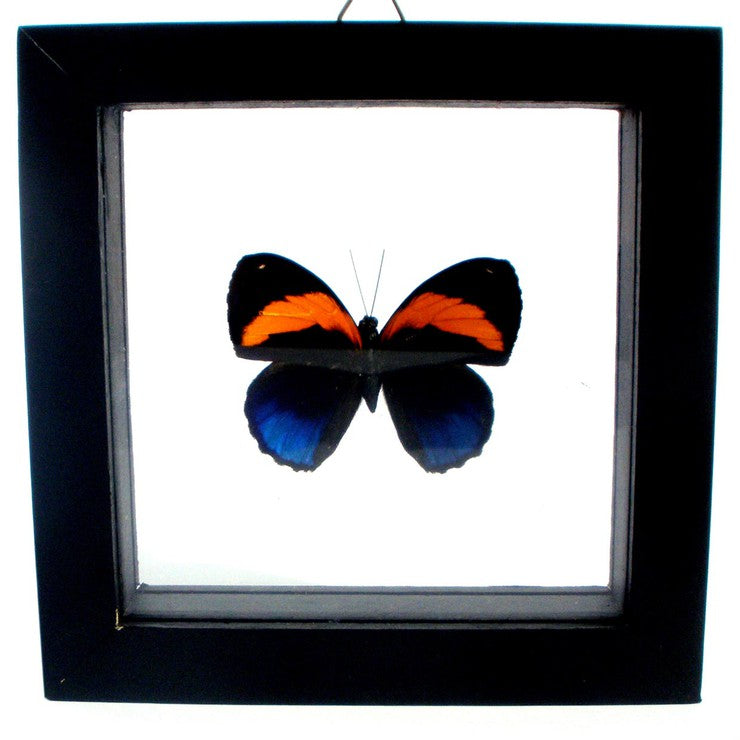 Framed Single Butterfly II