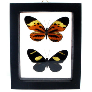 Framed Butterfly Pair VII