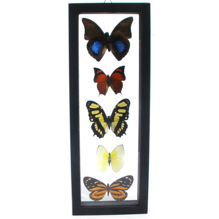 Five Framed Butterflies II – Fab