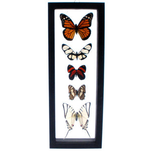 Five Framed Butterflies IV