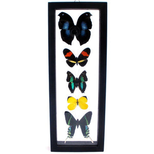 Five Framed Butterflies VII