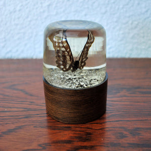 Embalmed Butterfly Paperweight