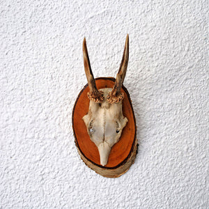 German Antler II