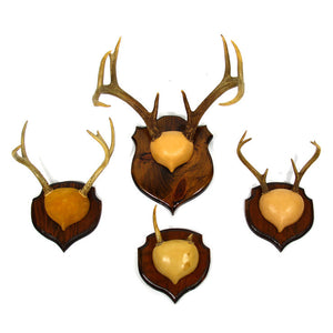 Antlers Set Of Four