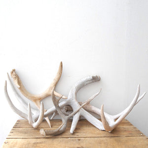 Antlers Collection 5Pc 2