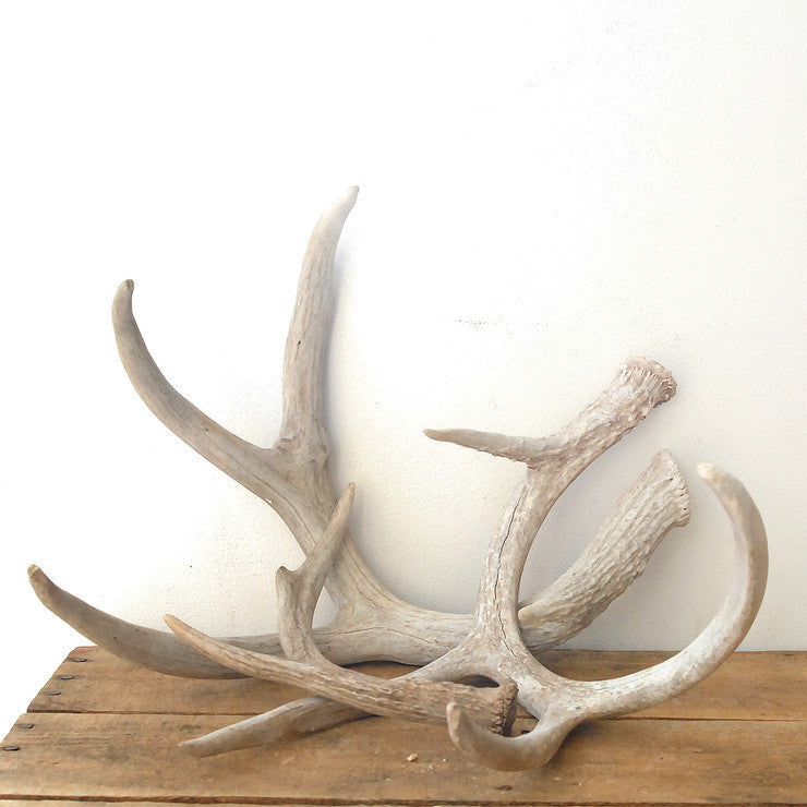 Antlers Collection 3Pc 3