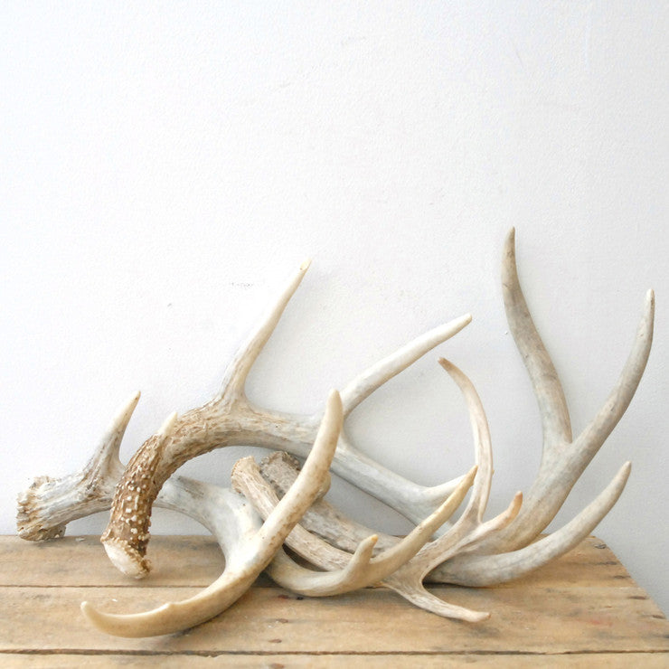 Antlers Collection 5Pc 3