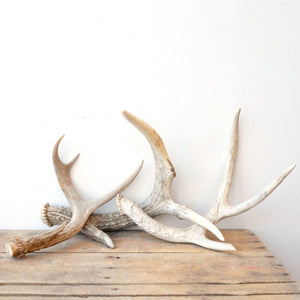 Antlers Collection 3Pc 5