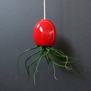 Air Plant Pod Small Gloss Red