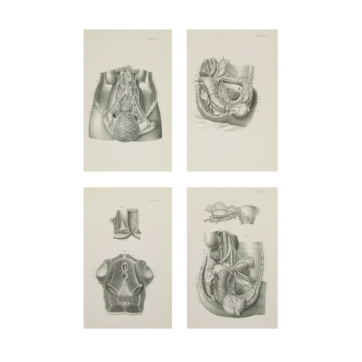 Female Anatomy Prints V