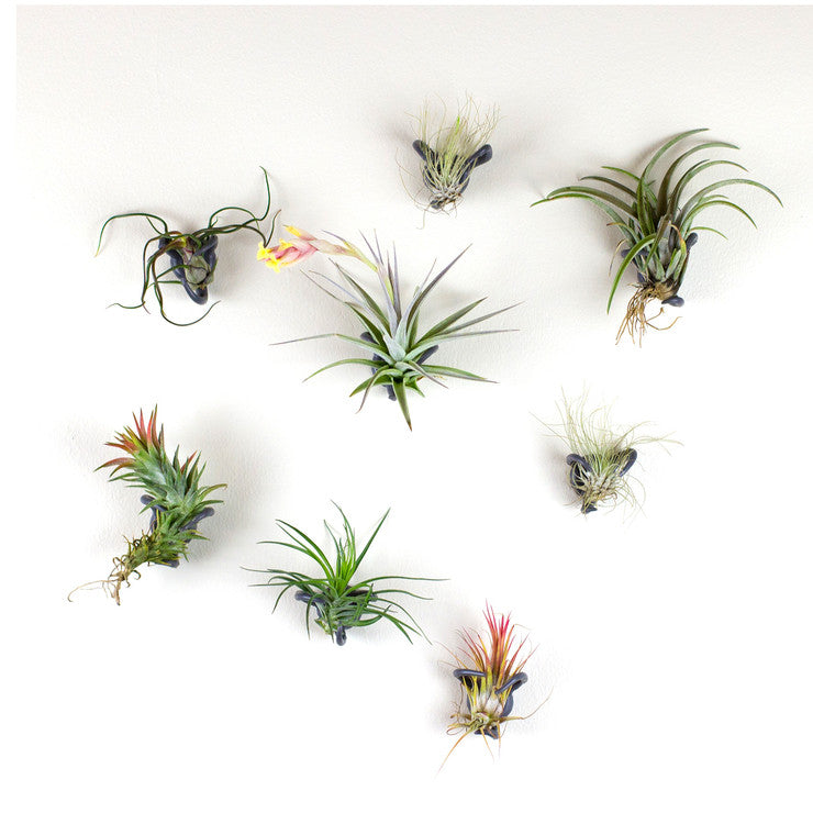 Airplant Nest Gray 4 Pc