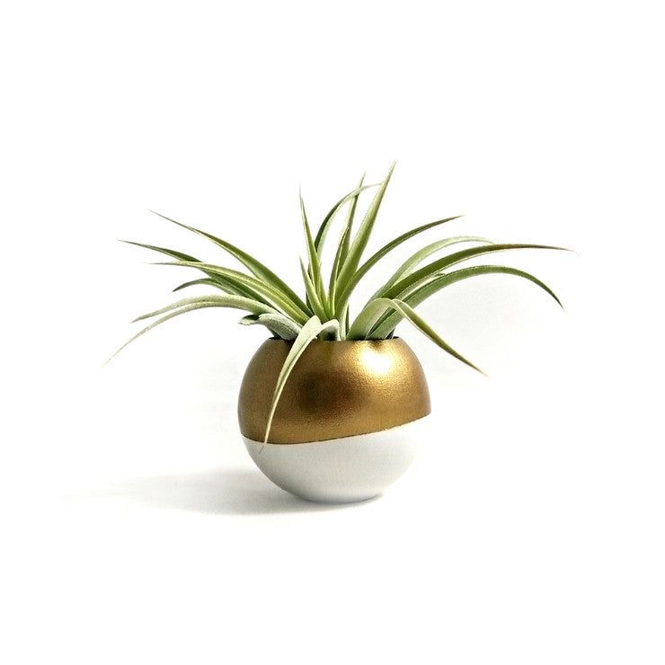 Mini Air Plant Pod & Succulent