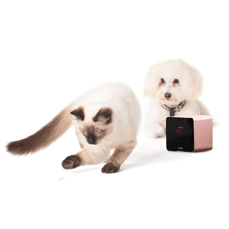 Petcube Camera & Laser Pointer