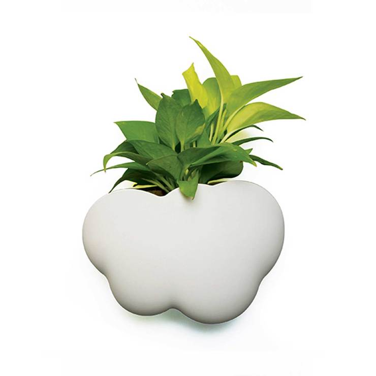 Cloud Plant Container