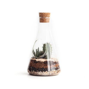 Chemistry Flask Terrarium Kit