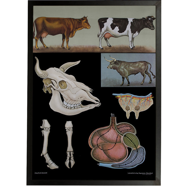 Cattle Framed Chart