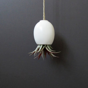 Air Plant Pod Small Matte White