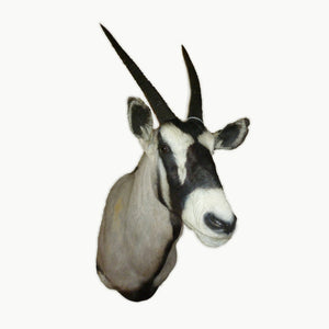 Gemsbok Shoulder