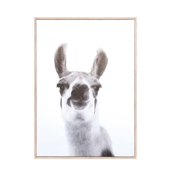 Canvas Wall Decor – Llama