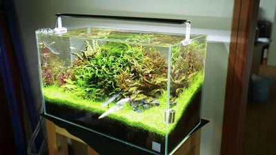 Rampe LED Chihiros A series 2  de 30 cm - Mes petits poissons