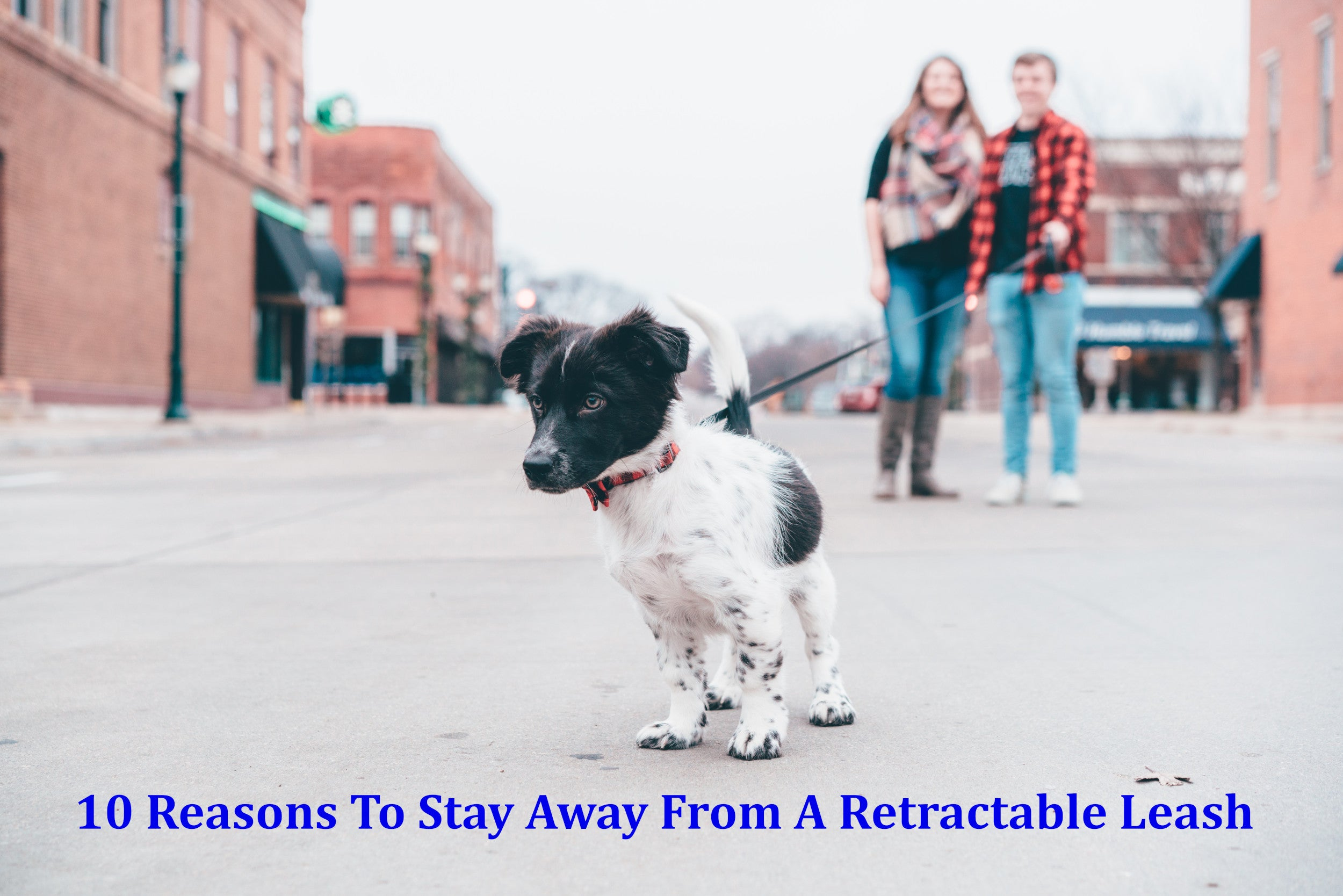 10 Reasons to Stay Away from a Retractable Leash