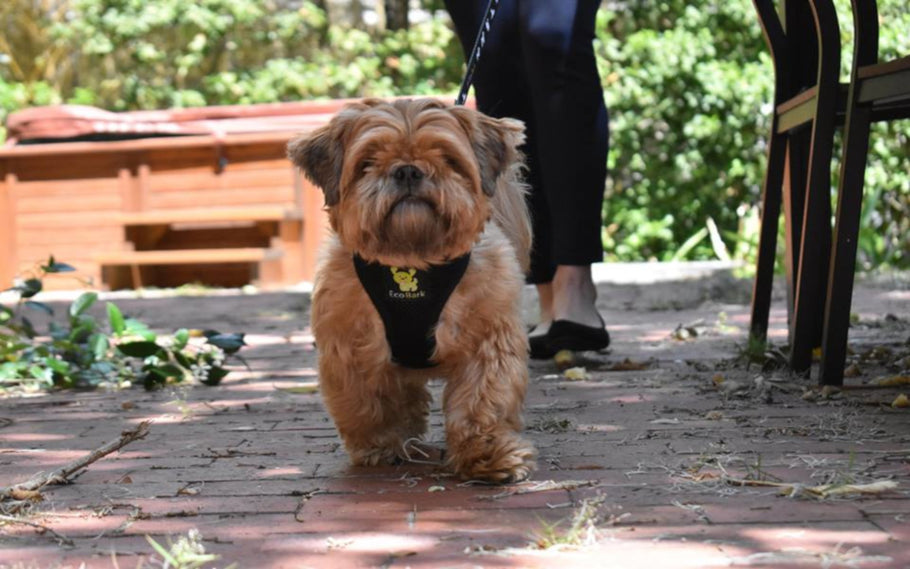 The First Eco-Friendly Chest Harness For Dogs Is Launched By EcoBark Pet Supplies