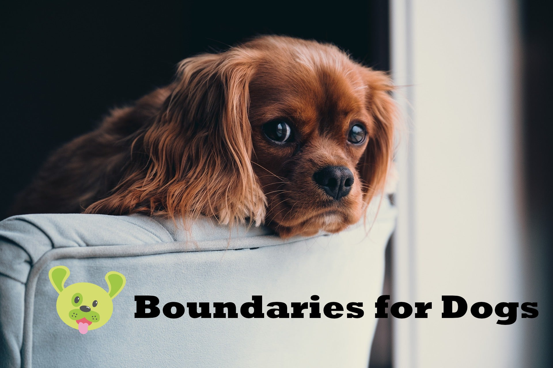 Boundaries for Dogs