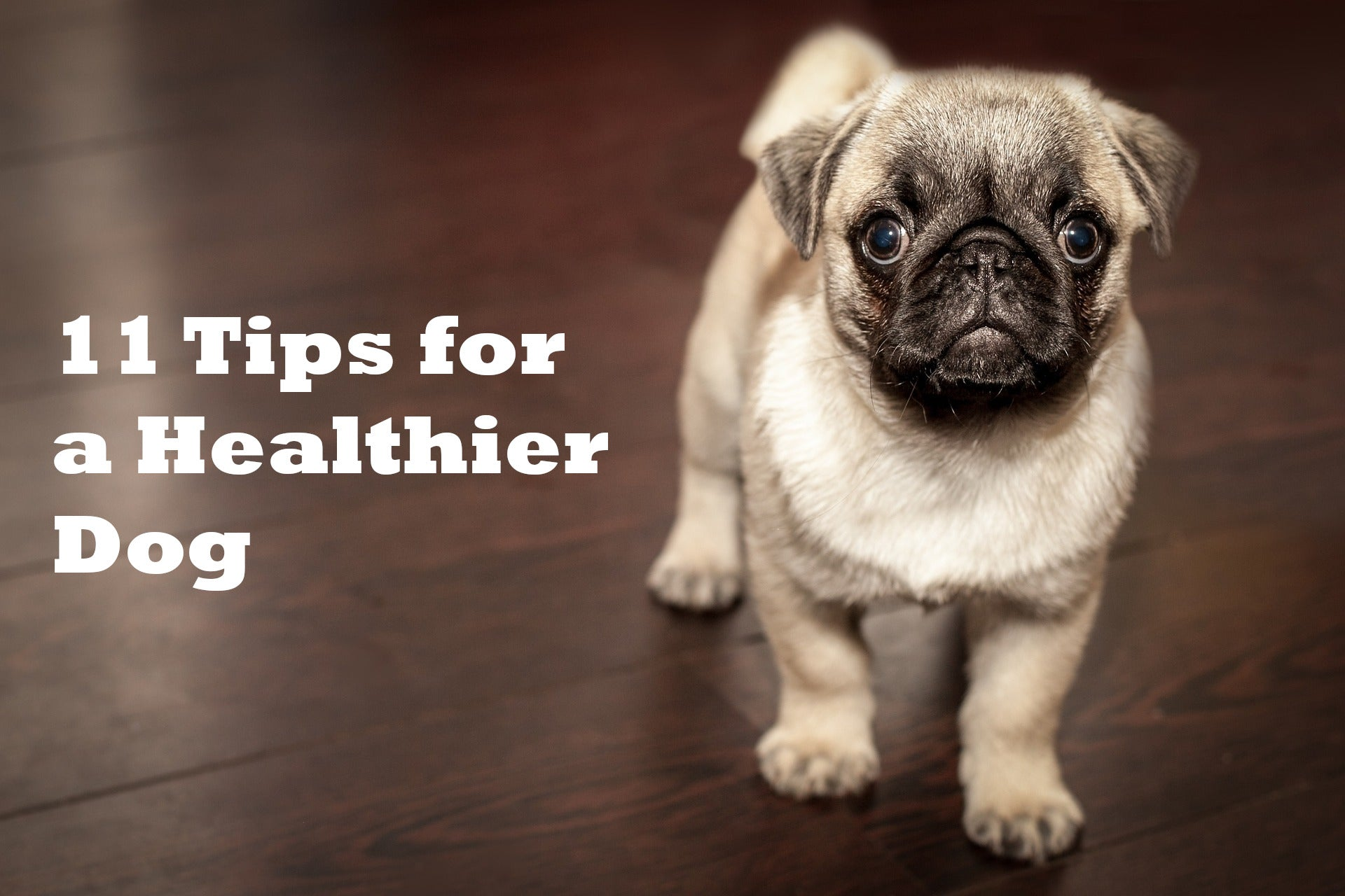 11 Tips for a Healthier Dog