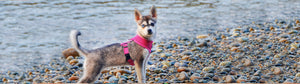 EcoBark Pink Harness Two