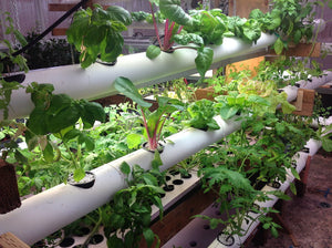 NFT or NFS Hydroponic systems. What are they and what do they grow best