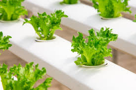 Getting started? Which kind of hydroponic system works best?