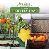 Best Fruit fly trap!