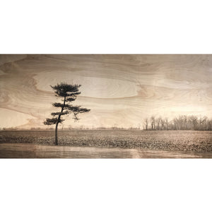 Birch Wooden Landscape - One Tree