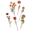 Dried Flower Stickers
