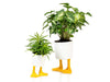 Duck Feet Planter Large Yellow