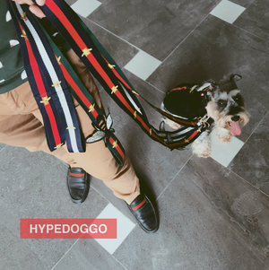 Gucci styled Bee Leash and Collar for Dogs - HypeDoggo