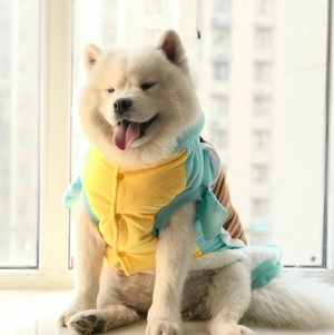 Squirtle Dog Costume - HypeDoggo