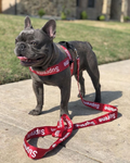 Supreme Dog Harness + Leash - HypeDoggo